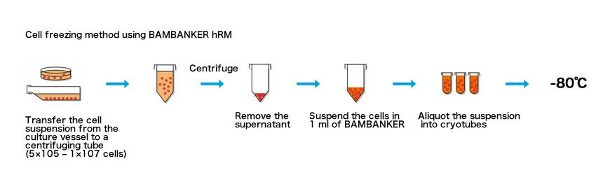 banbanka02