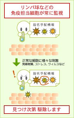 がんに対する免疫の働き
